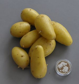 kartoffel drillinge