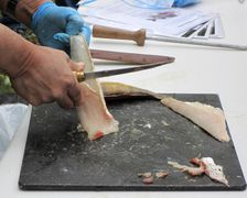 Filleting-01.jpg