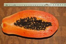 Papaya gross.jpg