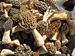 BlondMorels (8318718299).jpg